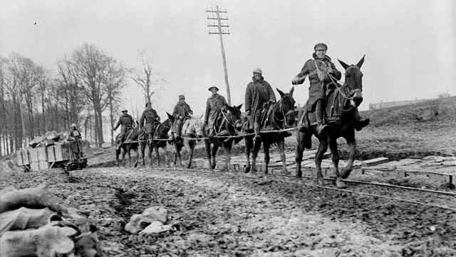 Mule team drawing ammunition on light railway track near Petit Vimy